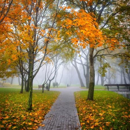 Autumn Park im Nebel
