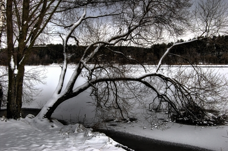 branchs of tree freeze in water of lake Stock Photo