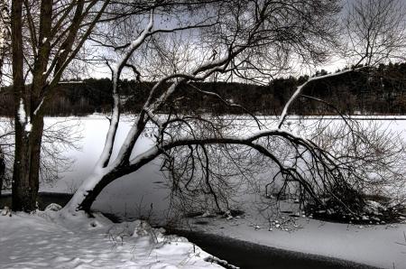 branchs von Baum Einfrieren Wasser des Sees Lizenzfreie Bilder
