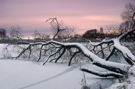 branchs of freezing tree  in water of lake Stock Photo