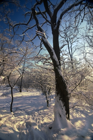 sonnigen Wintertag in Osteuropa Lizenzfreie Bilder