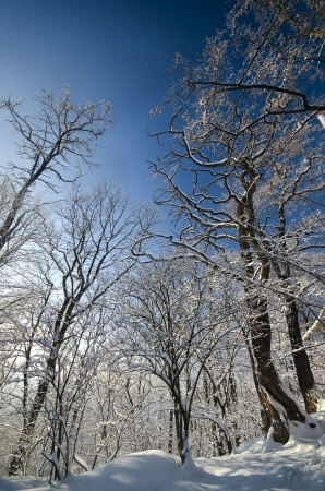 sunny winter day in Eastern Europe