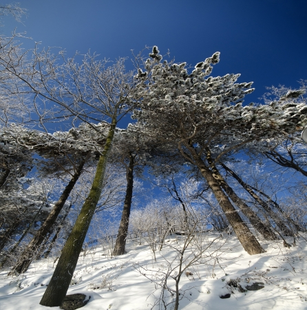 sunny winter day in Eastern Europe photo