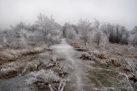 Pfad und Holz unter dem Schnee