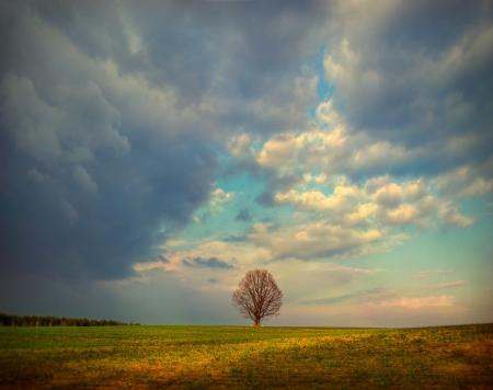 einsame Baum