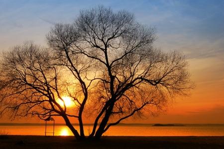 Silhouette der B�ume bei Sonnenuntergang