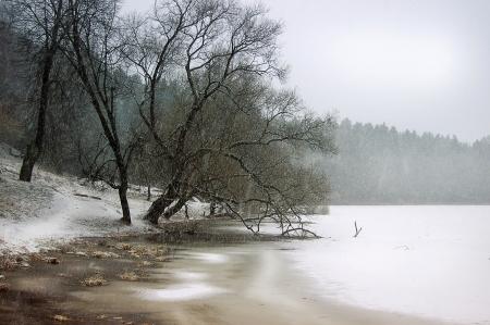B�ume in der K�ste des Sees