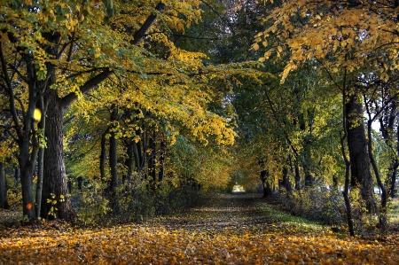 Weg f�r Spazierg�nge im Herbst bunte Parks Lizenzfreie Bilder