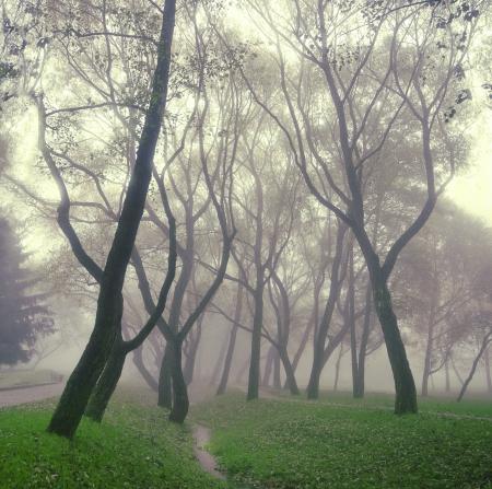 the silence of the world: mysterious fog, mist world in silence