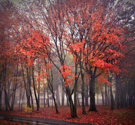 mysterious fog, mist world in silence