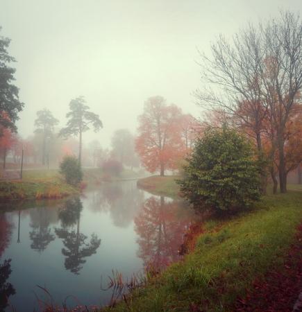 gelben B�ume stehen auf dem Ufer des Sees in den Nebel im Herbst