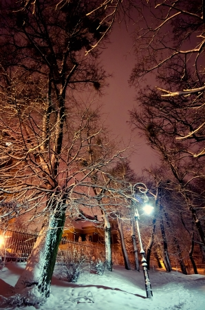 snowy winter park at night