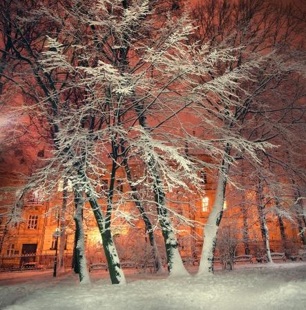 B�ume und Str�ucher im Schnee in einem Park in Winternacht