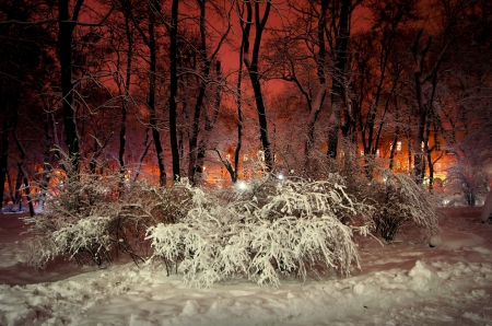 trees and shrubs in the snow in a park in winter night