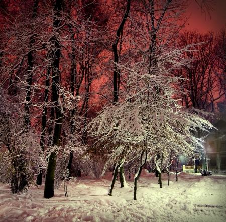 B?ume und Str?ucher im Schnee in einem Park in Winternacht Lizenzfreie Bilder