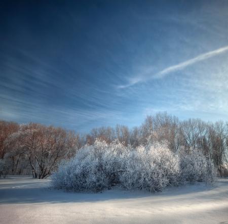 Snowy winter Tage in den verschneiten Winterwald