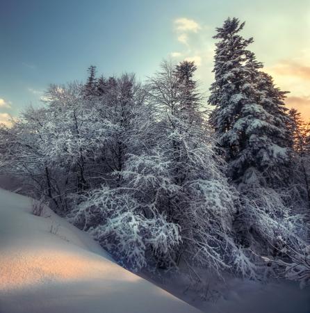 Winter schneebedeckten Wald im klaren Frost auf dem Platz