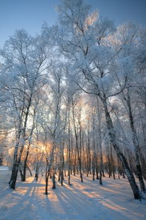 Snowy Wintertag in den verschneiten Winterwald