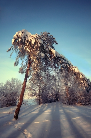 Sunny winter day in the snowy woods Stock Photo