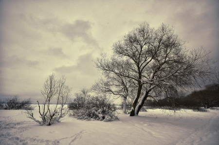 winter landscape trees in the snow in frost Stock Photo