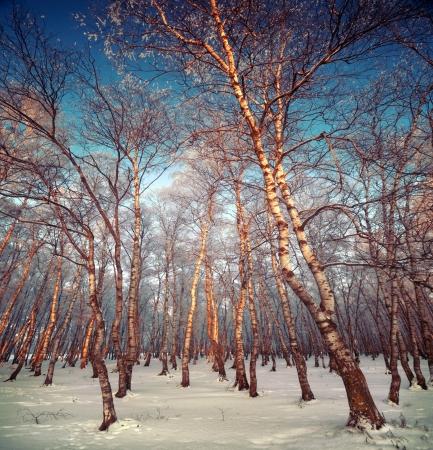 Snow sunny winter day in silver grove