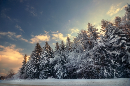 Winter snowy forest in the clear frosty weather Stock Photo