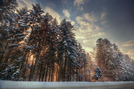 Winter schneebedeckten Wald in der klaren Frostwetter