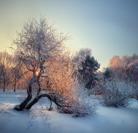 Schnee sonnigen Wintertag in Silver Grove