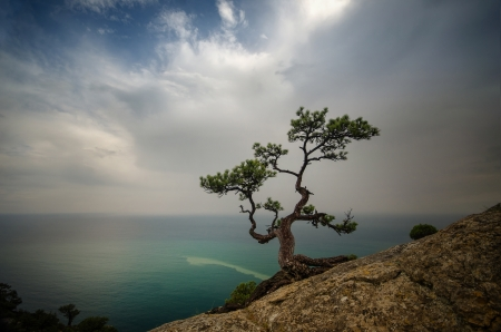 trees stand on a cliff above the sea