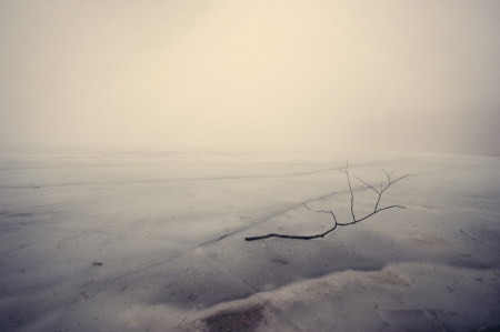 lonely tree branch on the ice