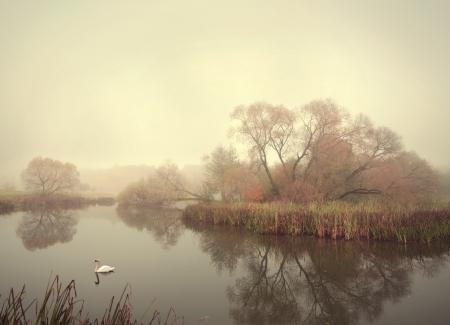 Schwan auf dem See im Herbst Rohrkolben Lizenzfreie Bilder