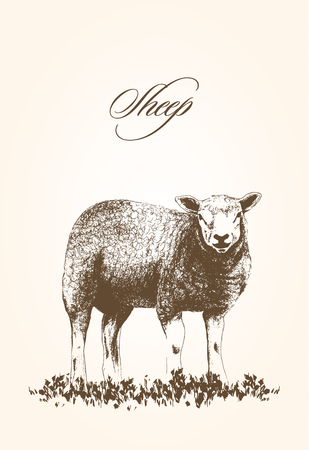 vector illustration of sheep on grass