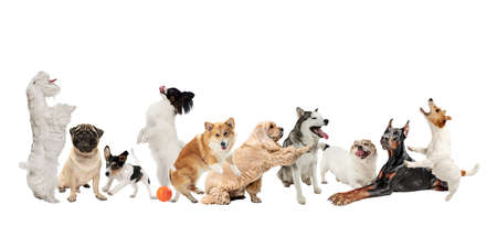 Creative collage of different breeds of dogs isolated over white background.