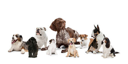 Group of different purebred dogs isolated over white studio background. Collage Imagens