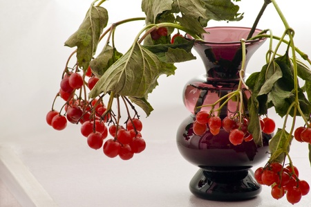 Viburnum twigs in a glass vase photo