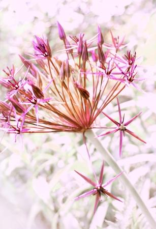 Beautiful flowers  small purple flowers on blurred background  Stock Photo
