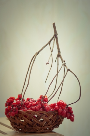 frostbitten: dry red berries of viburnum in basket on wooden chair  toned photograph Stock Photo