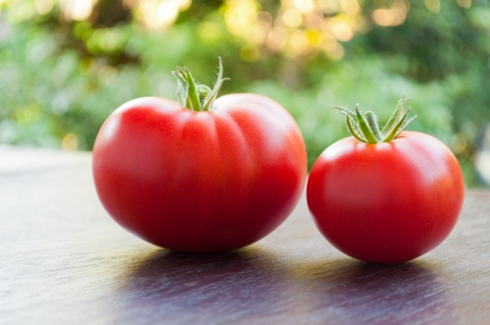 Two red fresh tomatoes Stock Photo - 15092545