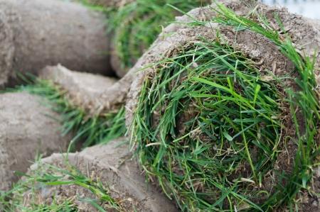 草の芝生 - 芝 sod はロールバックする準備ができてカバー Sod ロール 写真素材