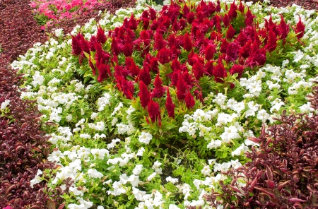 multicolored flowerbed on a lawn photo