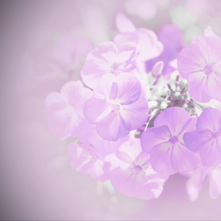 Soft blur with lilac flowers  Stock Photo