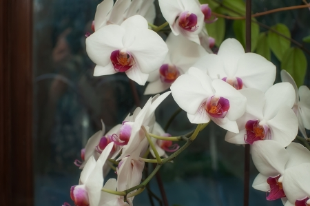 orchid house: Very beautiful blooming orchid in the house