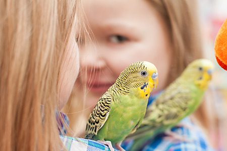 little girl playing with a parrot at the mirror Standard-Bild