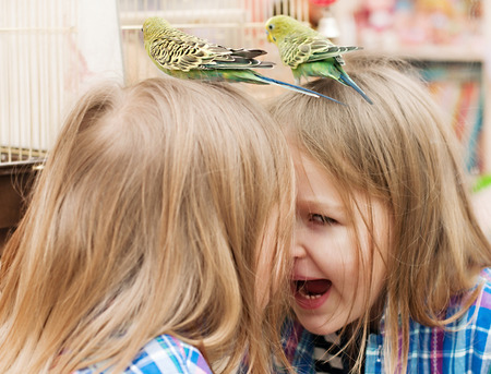to remain dormant: little girl playing with a parrot at the mirror Stock Photo