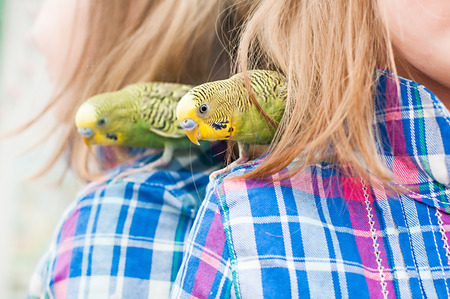 to remain dormant: Parrot on the shoulder of the child
