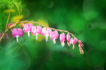 procesed: Beautiful meadow Stock Photo