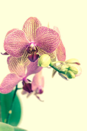 fragile peace: Orchid flowers Stock Photo