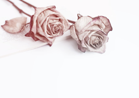 hymn: Fading rose. Dead rose.Roses frame.withered rose