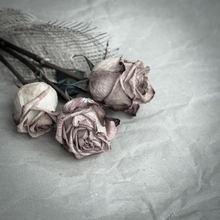 枯れたバラ 写真素材