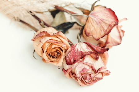 Fading rose.